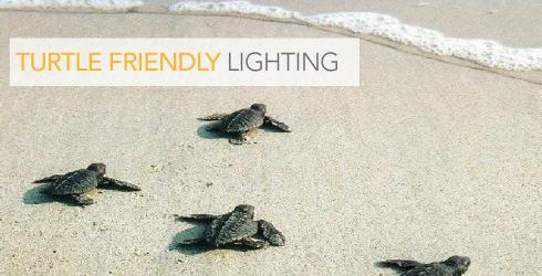 Solar lighting turtle lighting